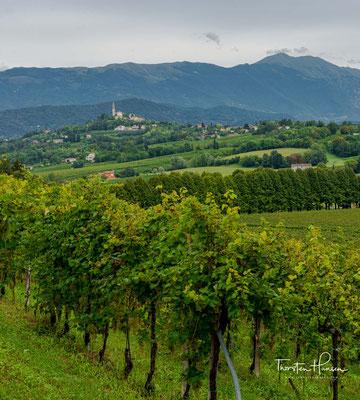 Prosecco Tranquillo (Stillwein) hat keine Perlage und macht ein Prozent der Gesamtproduktion aus.