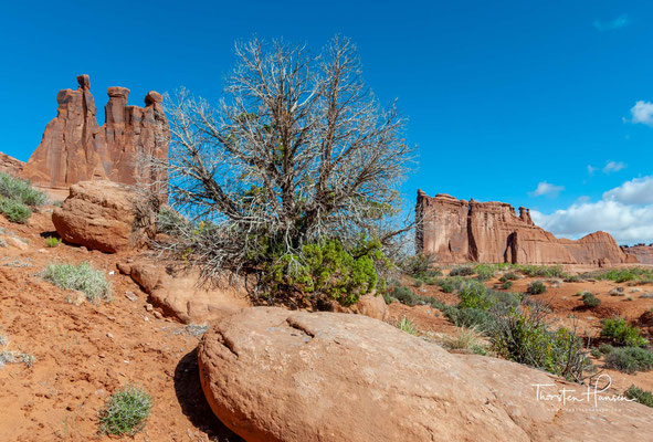 Das Colorado-Plateau ist eine Hebung, die als Aufwölbung durch seitlich wirkende tektonische Kräfte entstanden ist.