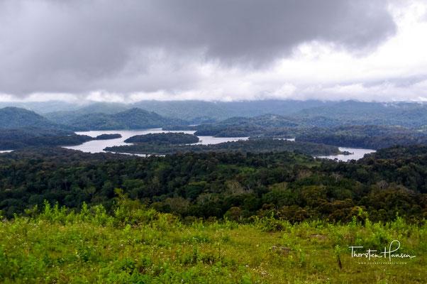 Die berühmteste ist wohl der Bengaltiger, von dem aber auf Grund seiner großen Reviere und seiner Vorliebe für weniger dichtbewachsene Lebensräume nur 35 bis 40 Individuen im Park leben.