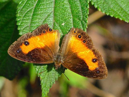 Schmetterling in Tagme