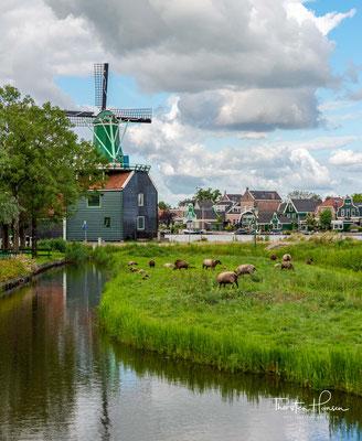 In den Windmühlen wird Holz gesägt, oder Gewürze, Öl oder Mehl gemahlen. In einer Mühle wird Naturfarbe hergestellt