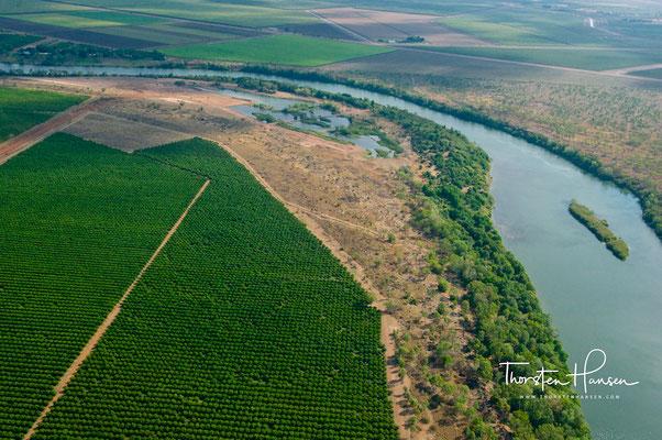 Sandelholzplantagen am Ord River
