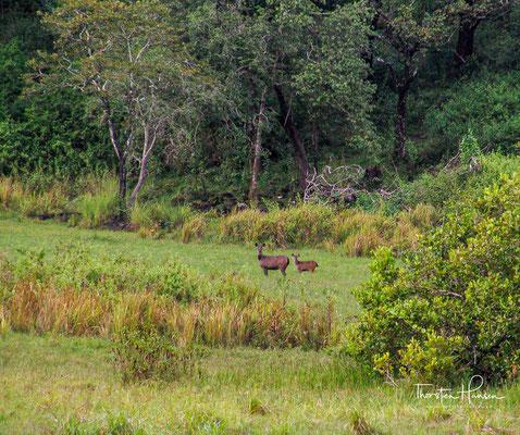 Rund 75 Prozent des gesamten Schutzgebietes sind von unberührtem immergrünem oder halbimmergrünem tropischem Regenwald bedeckt.