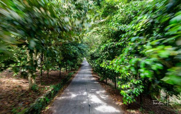 Traditionell waren Fischfang und die Bewirtschaftung von Palmenplantagen die wichtigsten Wirtschaftszweige. Auch heute noch sind die Erzeugnisse der Plantagen nach dem Tourismus die größte Einnahmequelle.