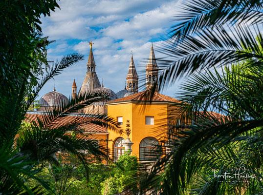 Botanischer Garten von Padua, im Hintergrund die Basilika des hl. Antonius
