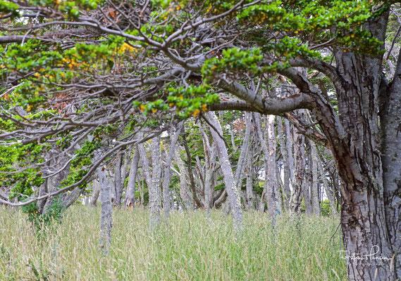 Er kam am 21. September 1843 in Punta Santa Ana an, etwa 2 km von Puerto del Hambre entfernt. Er leitete hier den Bau einer Festung, wobei er hauptsächlich Baumstämme und Schmutz- und Grasziegel verwendete.