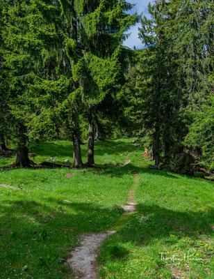 Über Umwege durch schöne ruhige Wälder...
