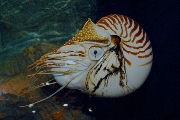 """Begeben Sie sich auf eine Entdeckungsreise durch das """"Grand Aquarium"""", beobachten Sie die Meeresbewohner von der weltweit größten Aquariumkuppel oder durch ein riesiges 8 mal 13 Meter großes Beobachtungsfenster."""