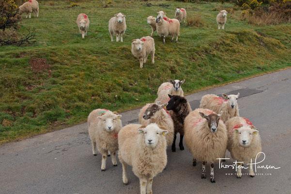 Exmoor-Nationalpark