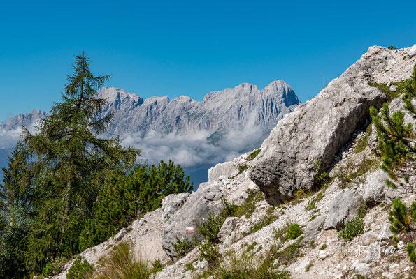 ....unterhalb des Monte Tamer, bis zur Alm Malga Moschesin