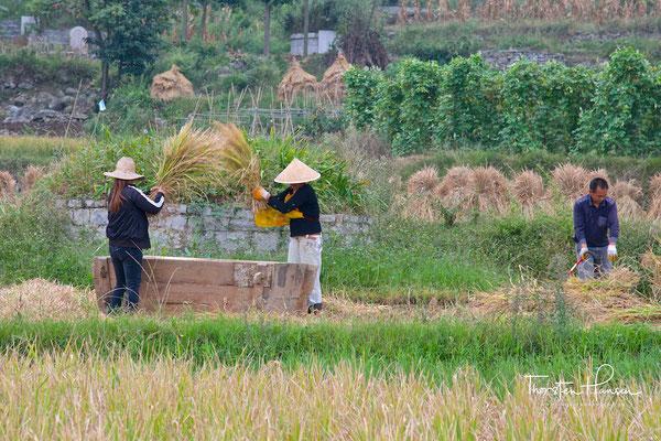 Landwirtschaft in China