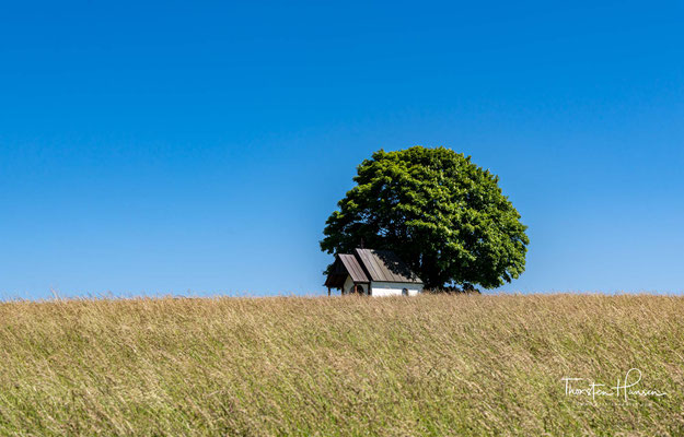 """Neben der Dreifaltigkeitskapelle trotzt dem rauen böhmischen Wind  ein einziger Baum, der von den Einheimischen liebevoll das """"Birnbeiml"""" genannt wird."""
