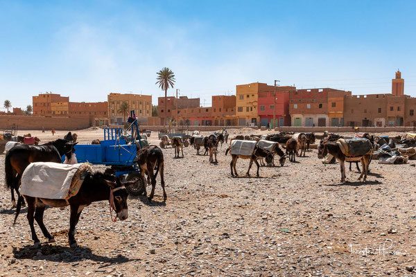 Es gibt wohl keinen derart lebendigen und vielfältigen Markt in ganz Marokko.