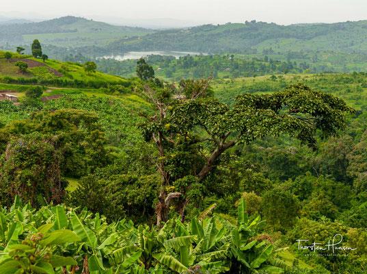 Die Kasenda-Krater (auch Kyatwa Vulkanfeld genannt) sind eine Gruppe von etwa 40 bis 60 vulkanischen Kraterseen im Distrikt Kabarole im westlichen Uganda