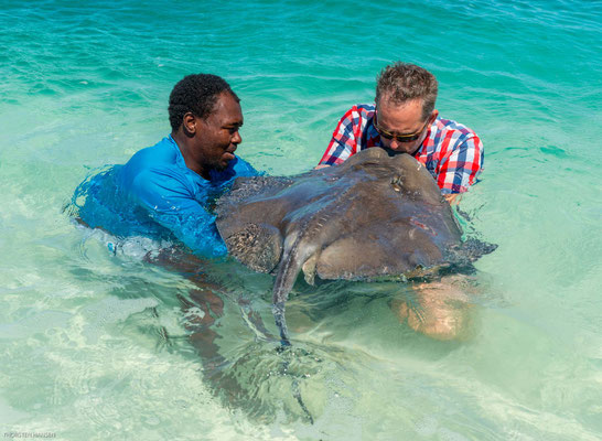 Sie werden mit Fischen und anderem Seegetier angelockt und garantieren den Besuchern schöne Fotos im seichten, warmen Wasser.