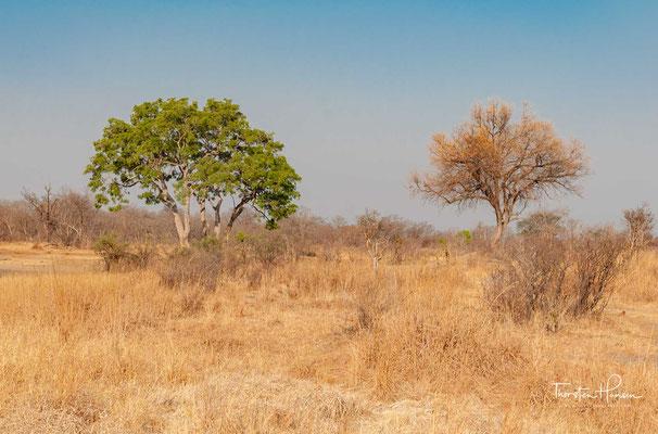 Der Hwange-Nationalpark  ist mit 14.651 Quadratkilometer der größte Nationalpark in Simbabwe.