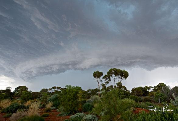 Australian Arid Lands Botanic Gardens in Port Augusta