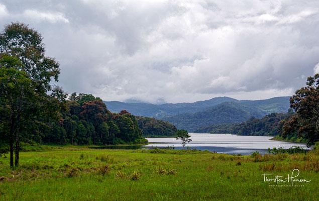 Periyar ist ein Tierschutzgebiet, Nationalpark und Tigerreservat in den Bergen der Westghats an der Grenze zw. Kerala und  Tamil Nadu