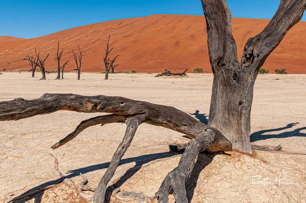 Das riesige Schutzgebiet ist etwa 500 km lang und zwischen 100 bis 150 km breit.