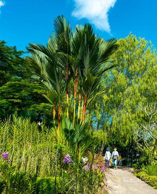 Bis 1917 hatte der Botanische Garten die Region mit mehr als 7 Millionen Gummibaumkeimlingen beliefert und Südostasien wirtschaftlichen Wohlstand beschert.