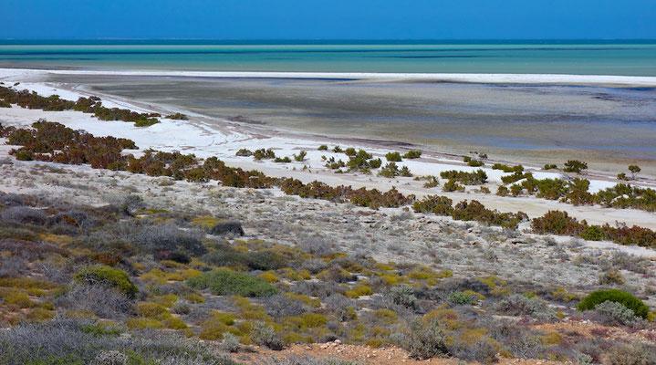 Shell Beach ist ein ca. 40 km langer Küstenstreifen an der westaustralischen Shark Bay