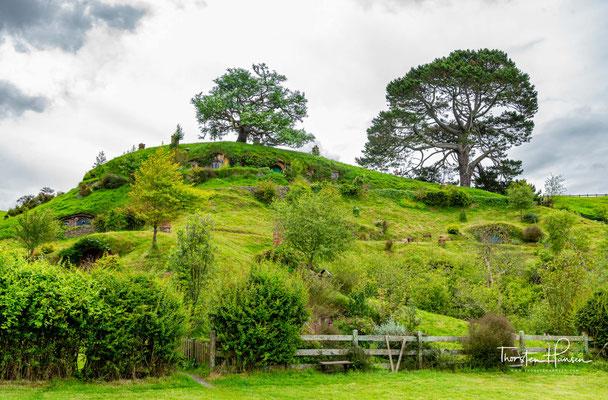 Die Region um Matamata ist bekannt für die Zucht von Vollblutpferden.