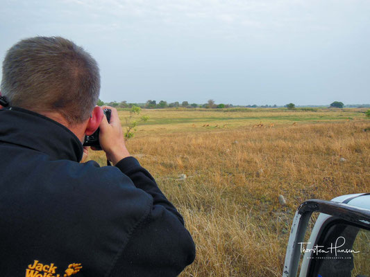 Zwischen Oktober und Dezember jeden Jahres steigen etwa 10 Millionen strohfarbene Fledermäuse in einen kleinen, immergrünen Sumpfwald im Kasanka-Nationalpark ab.