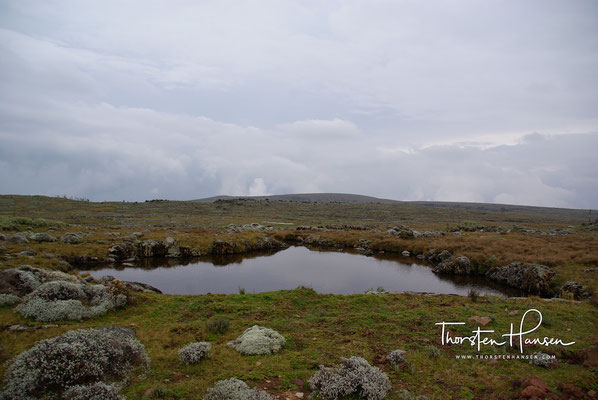 Sanetti Plateau im Bale Mt. NP