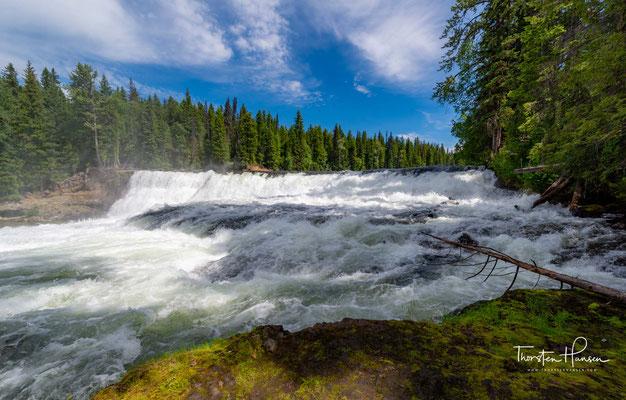 Dawson Falls – als Little Niagara Falls bezeichnet stürzt der Murtle River 15 Meter tief über eine 90 Meter breite Felsstufe
