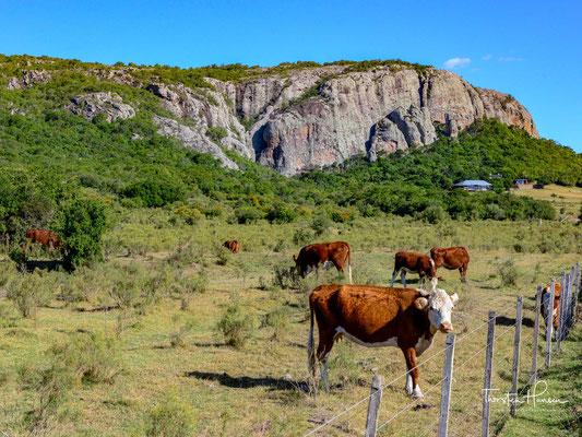 Pferde in der Sierra de las Ánimas in Uruguay.