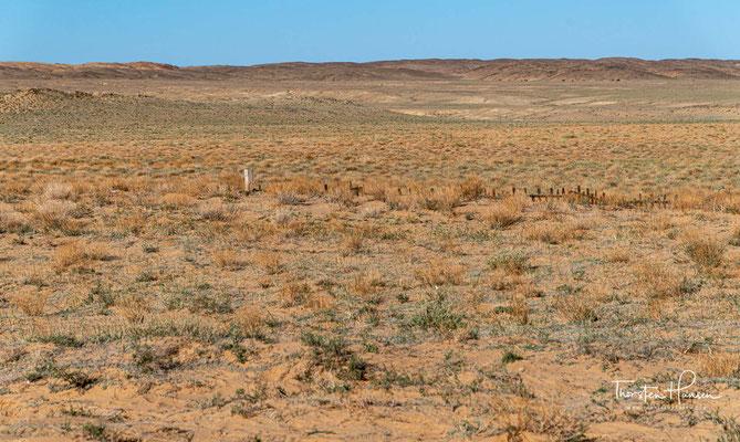 Berühmt ist diese Wüste durch zahlreiche gut erhaltene Fossilienfunde von Dinosauriern und frühen Säugern. Aber auch seltene und vom Aussterben bedrohte Tierarten, die nur in der Gobi zu finden sind, gehören zu den großen Schätzen dieser Wüste