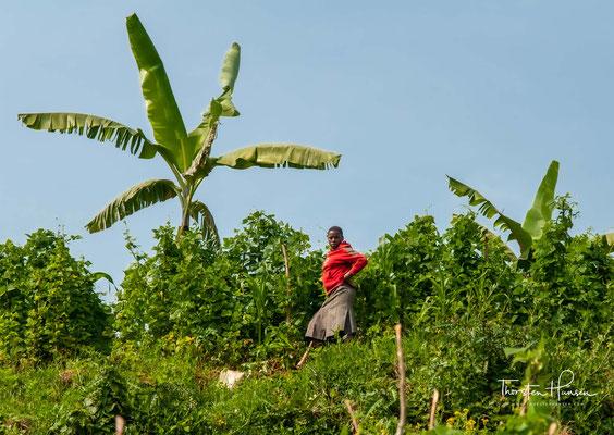 Das Hauptzentrum des Sees ist das Dorf Bufuka. Die Bewohner der Gegend gehören dem Bakiga- und dem Batwa-Stamm an.