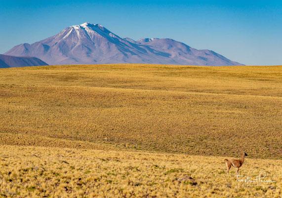 Der Acamarachi (auch: Cerro Pili) ist ein Stratovulkan in Nord-Chile. Seine Höhe beträgt 6046 m. Die Neigung der Flanken erreicht stellenweise 45 Grad.