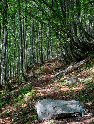 Der Weg führt heute stetig bergab in Tal