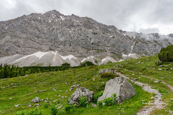 Berg-Ahorne werden rund 500 Jahre alt, viele der Bäume im Großen Ahornboden haben daher ihre natürliche Altersgrenze erreicht.