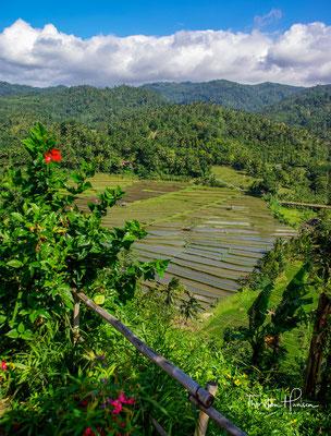 Auf Bali ist jeder Bauer, dessen Feld an ein Bewässerungssystem grenzt, verpflichtet, einem Subak beizutreten.