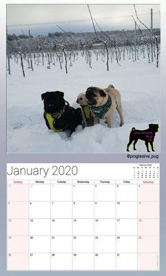 progressive-pug 2020 calendar - january