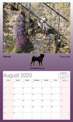 progressive-pug 2020 calendar - august
