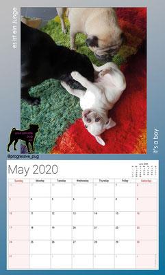 progressive-pug 2020 calendar - may