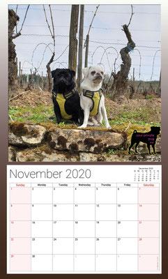 progressive-pug 2020 calendar - november