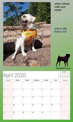 progressive-pug 2020 calendar - april