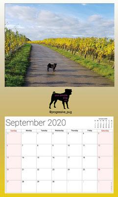 progressive-pug 2020 calendar - september