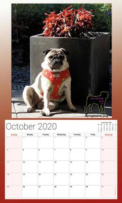 progressive-pug 2020 calendar - Muffin in october