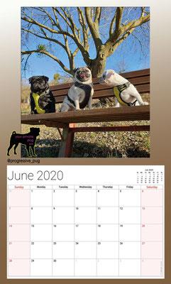 progressive-pug 2020 calendar - june
