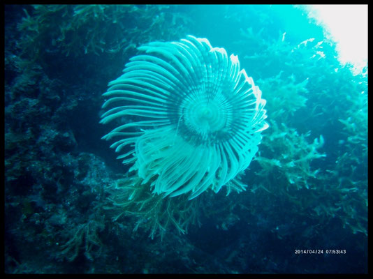 Tube Flower