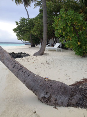 Malediven Athuruga & Thudufushi - Ari Atoll
