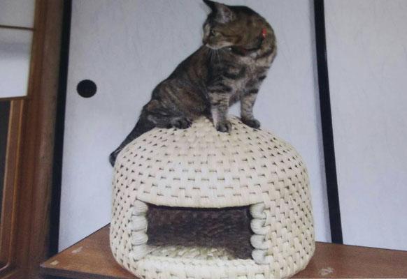 猫ちぐらの上に乗っかる猫