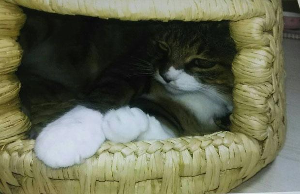 夏涼しく冬に暖かい猫ちぐら