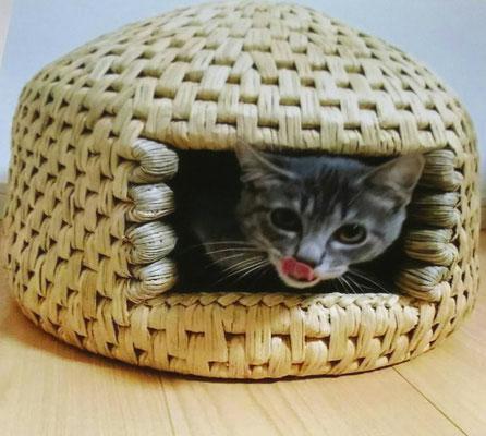 猫ちぐらの中に猫
