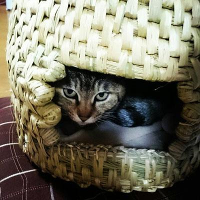 猫ちぐらは猫ちゃんに最適なおうち